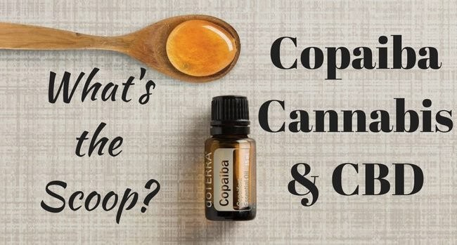 Pain Patients and Pot Users Are Stockpiling Copaiba Essential Oil- Here's Why